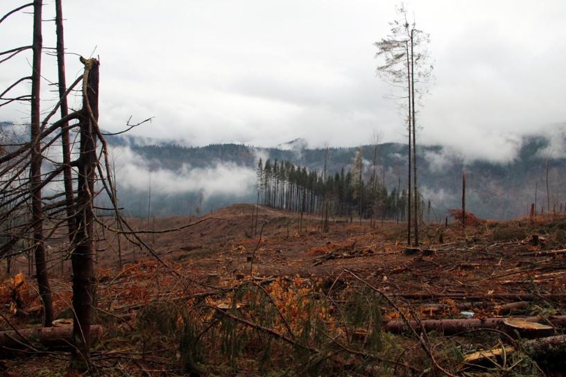 Порушення встановила перевірка Держекоінспекції у Закарпатській області. Раніше про незаконні рубки в пралісах заявляли екологи.
