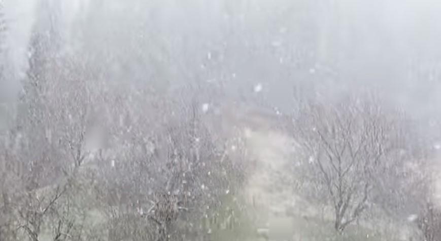 Відео зі снігопадом, який напередодні зафіксували в Міжгр'ї, поділись в мережі Фейсбук.