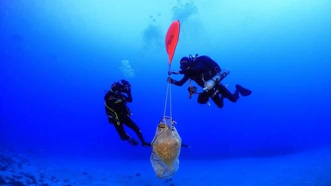У Егейському морі виявили залишки корабля, який затонув ще понад 2 000 років тому. Античні амфори, знайдені археологами, ілюструють тогосчасні торгові маршрути.