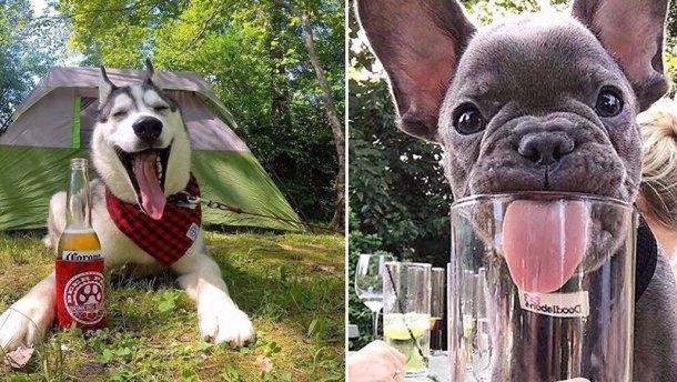 Американка створила пиво для собак, від якого тварини в захваті