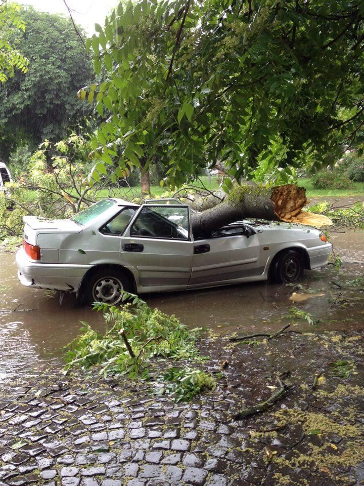 В результаті буревію у Виноградові аварійне дерево впало на автомобіль