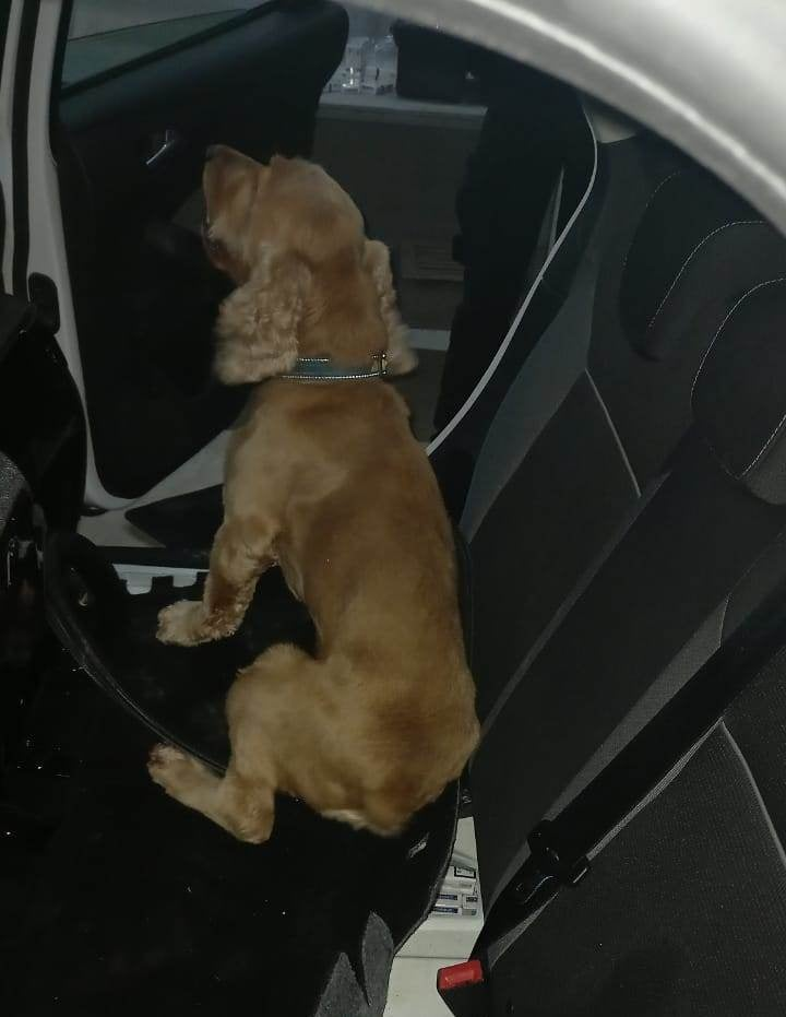 На митному посту «Тиса» Закарпатської митниці Держмитслужби службовий пес блискавично винюхав два тютюнові тайники в авто.