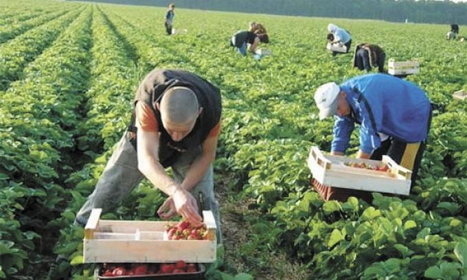 Вдома краще: заробітчанин розповів про життя нелегалів у Польщі