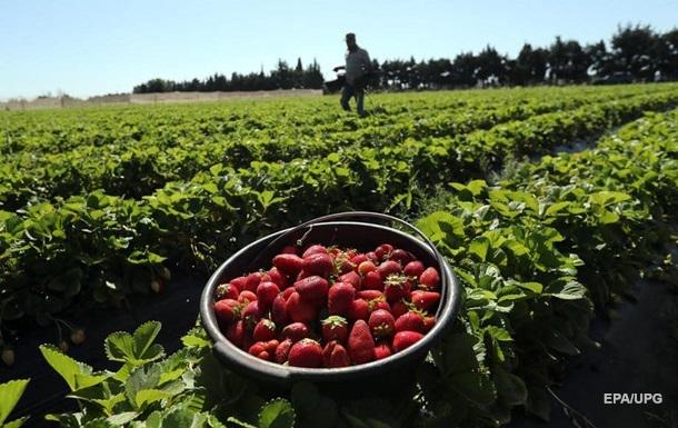 Головною причиною подорожчання полуниці стали погодні умови - через травневі заморозки була втрачена значна частина врожаю.