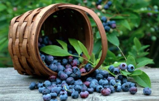 Дари природи: закарпатський біолог назвала топ-6 рослин, які не варто оминати в Карпатах