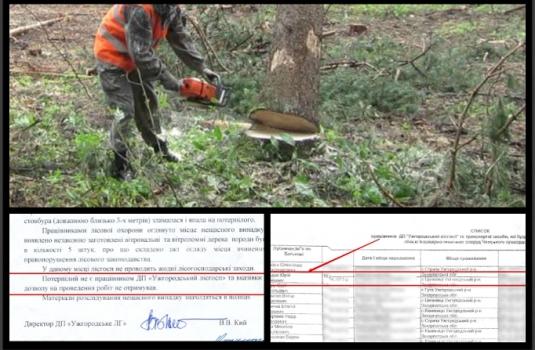 РОЗСЛІДУВАННЯ: Голос Карпат отримав офіційне підтвердження інформації, яку заперечував Ужгородський лісгосп / ФОТО