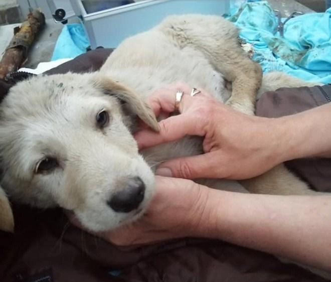 Нечеловеческая жестокость поразила жителей Ужгорода, которые нашли раненого щенка.