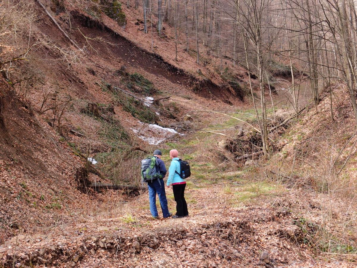 Лісівники облаштовують новий туристичний маршрут від Ужгорода до перечинських Дубриничів