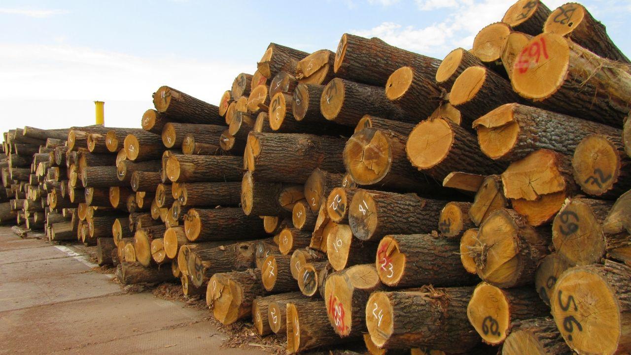 Наші вироби із дерева не такої якості, щоб не віддавати ліс ЄС - Депутати облради (Відео)