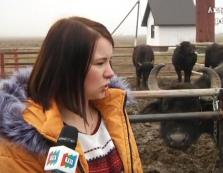 На закарпатській Притисянщині розводять буйволів / ВІДЕО