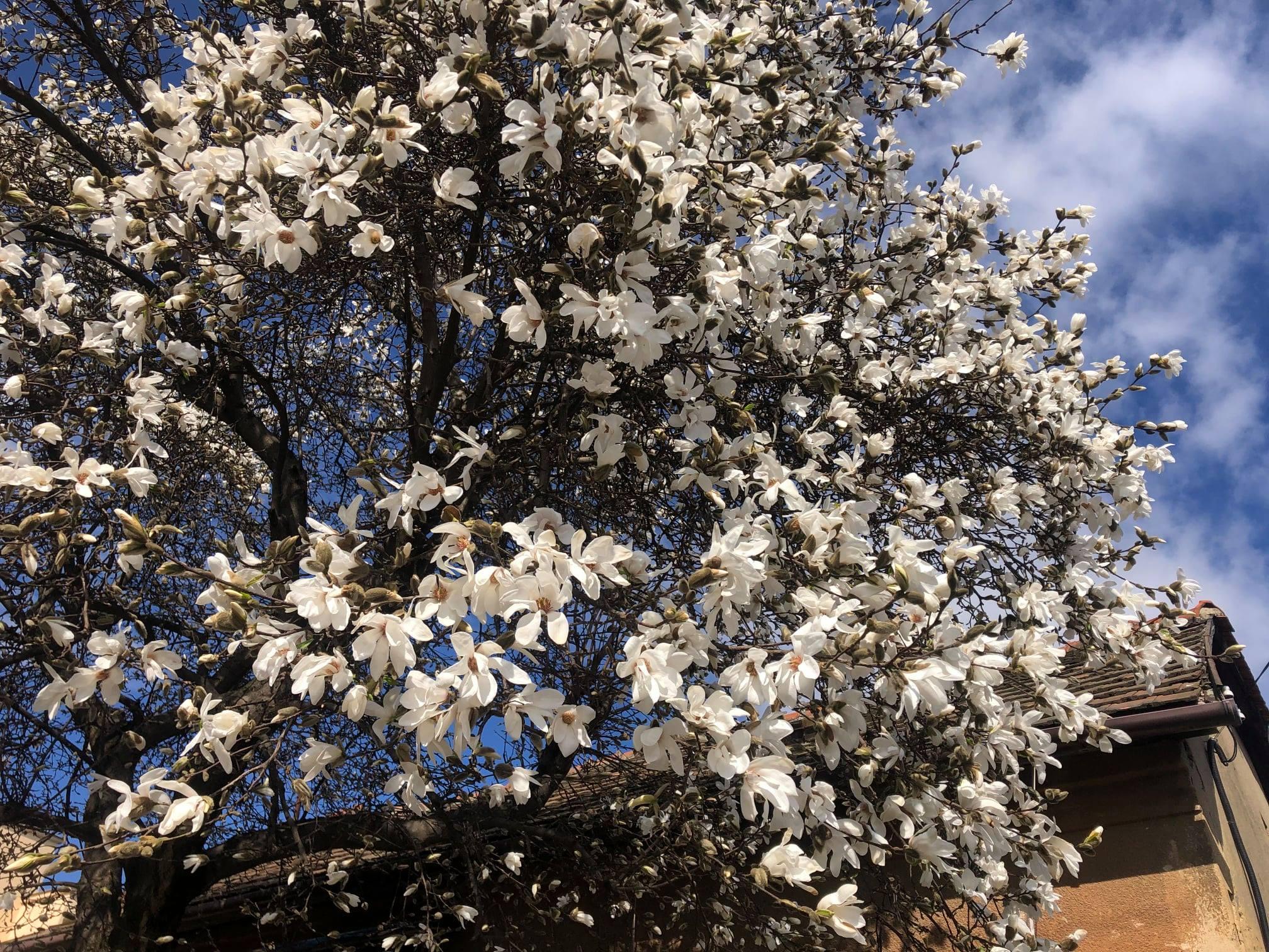 Після довгого періоду холодних днів, який затягнувся до середини березня, на Закарпатті настала тепла весняна погода.