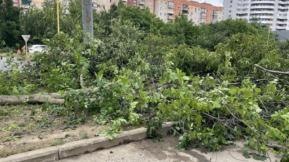 Упродовж п'ятниці та суботи, 2 та 3 липня на вулиці Легоцького в Ужгороді комунальні служби провели обрізку та вирубку дерев.