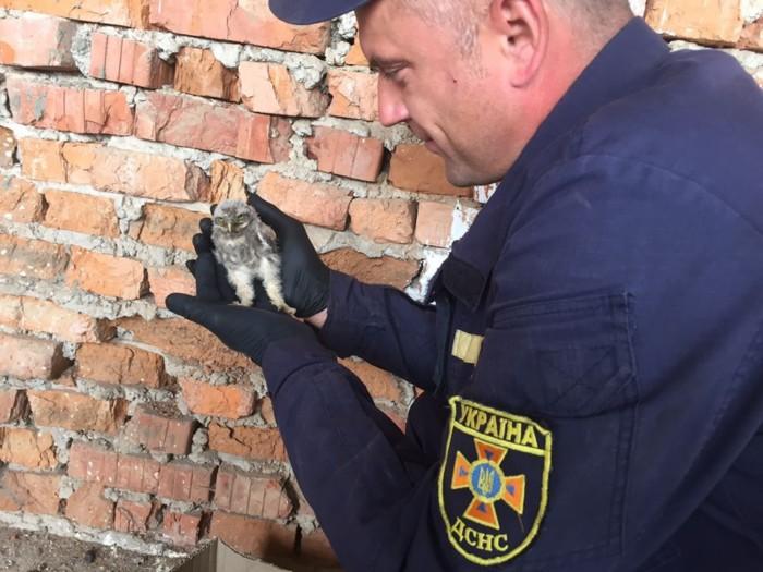 Сьогодні, прибираючи територію довкола навчальної пожежно-рятувальної вежі, що в м. Іршава, рятувальник місцевого підрозділу ДСНС Віталій Попович натрапив на незвичну знахідку.