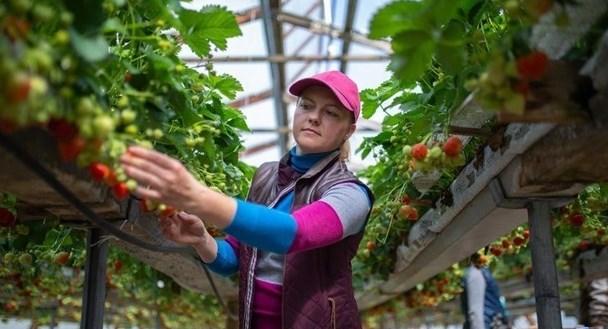 Совет ЕС принял решение улучшить условия труда и проживание в ЕС сезонных рабочих из третьих стран.