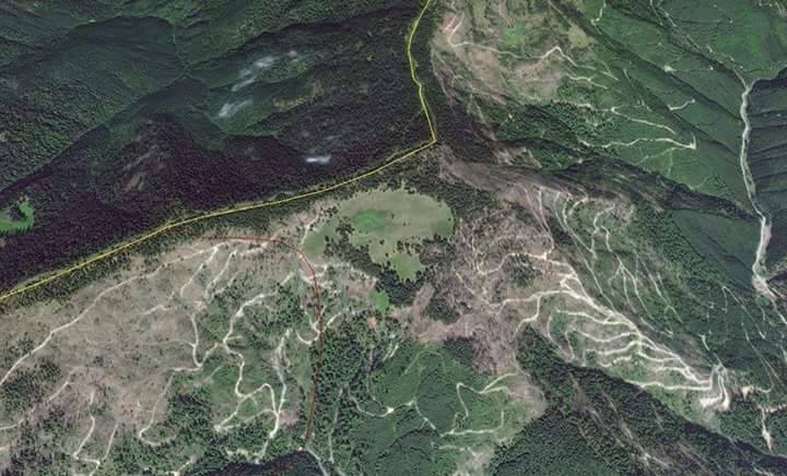 Задача №1 - остановить вырубку леса, - Луценко - Цензор.НЕТ 4917
