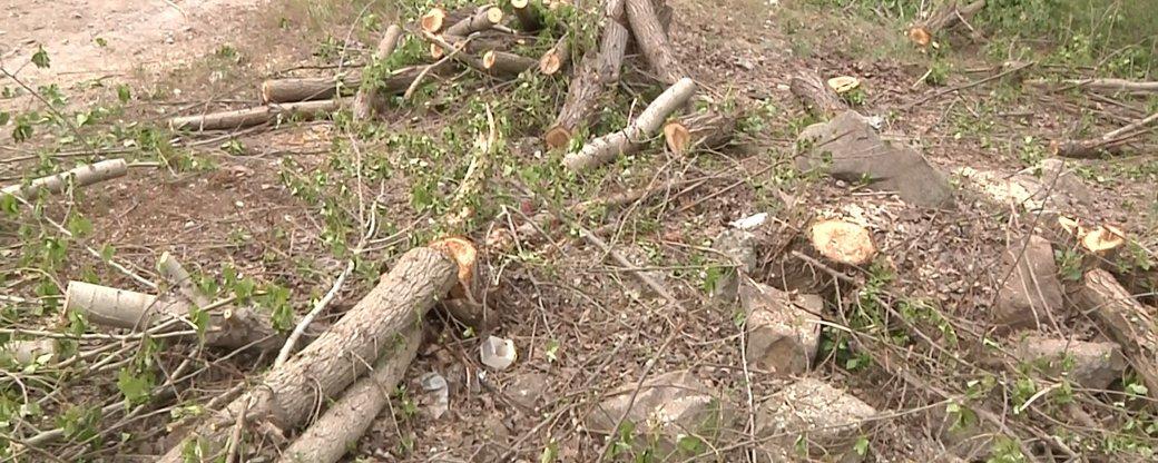 В Закарпаттии будут судить хозяина леса и главного лесничества государственного предприятия «Мокрянское ЛМГ», которые подозреваются в незаконной вырубке деревьев.
