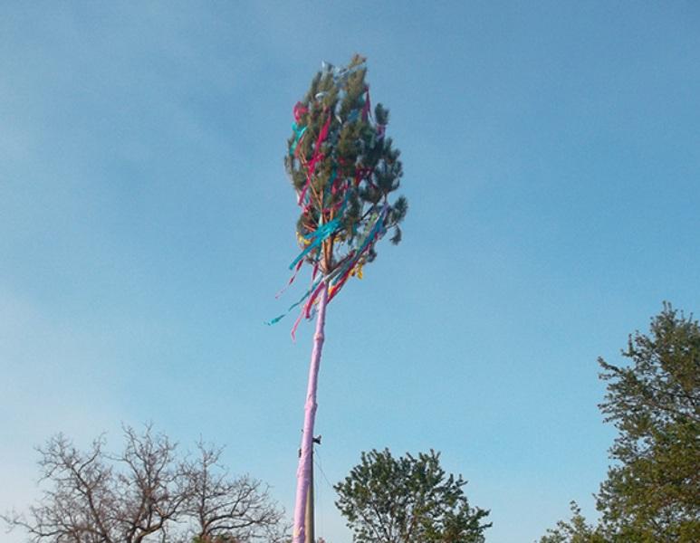 За традицією, напередодні першого травня, у селах Перечинщини ставлять «мая» – оформлене  стрічками й золотком дерево на дах будинків незаміжнім дівчатам.