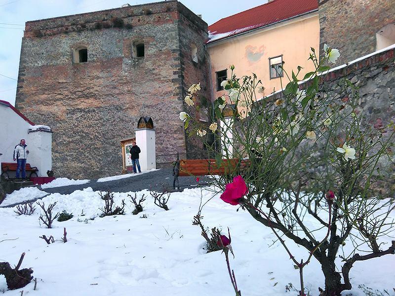 В мукачівському замку Паланок посеред снігу зацвіли троянди