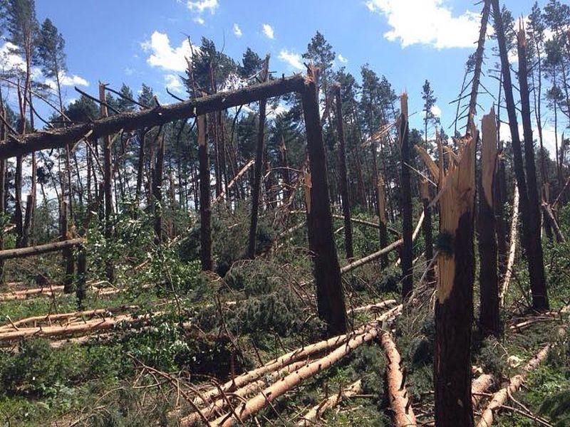На Закарпатті буревій повалив велику кількість лісу