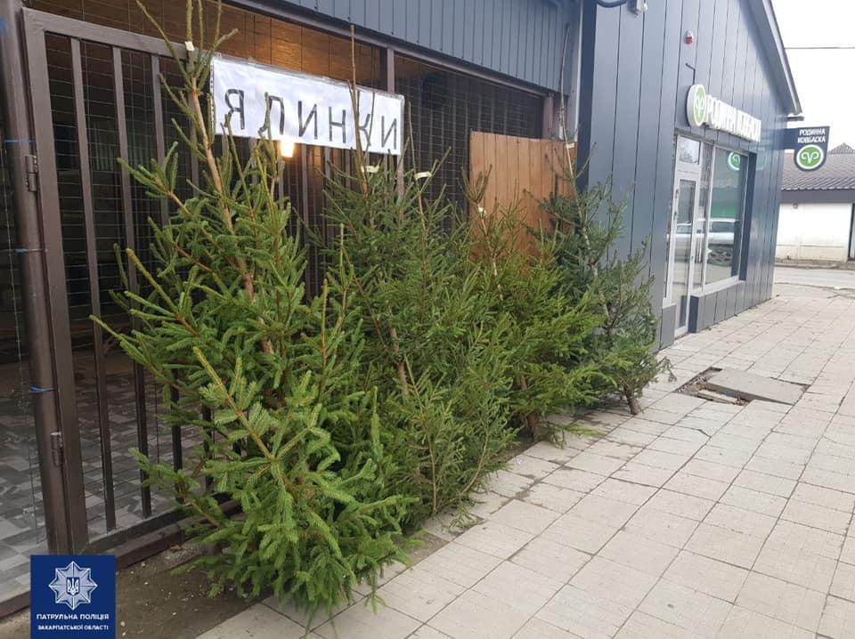 В Ужгороді з 14 грудня продають ялинки. Місця продажу були визначені відповідно до розпорядження міського голови.