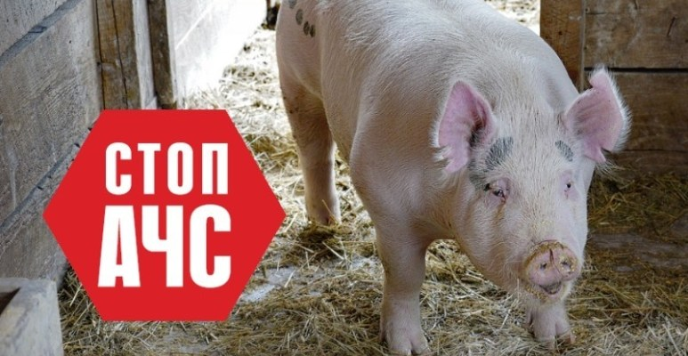 """На господарстві ТзОВ """"Галичина – захід"""" у Львівській області виявили африканську чуму свиней, в зв'язку з цим на підприємстві ввели карантин."""