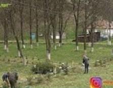 На Іршавщині з'явилась Алея Пам'яті Лісівникам-Героям АТО