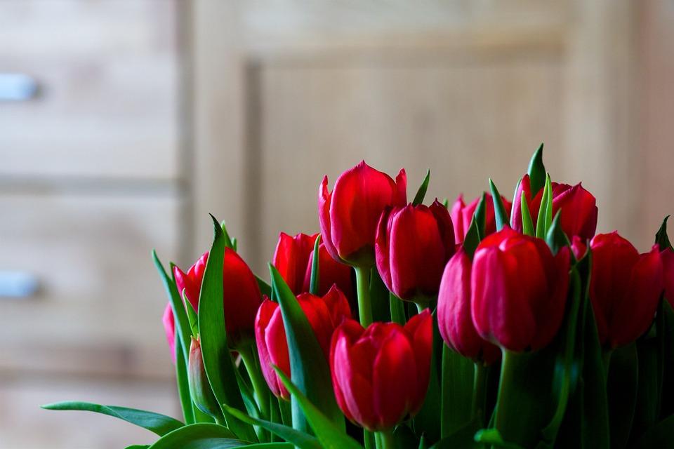 1 квітня народилась закарпатка Прокоп Ольга.