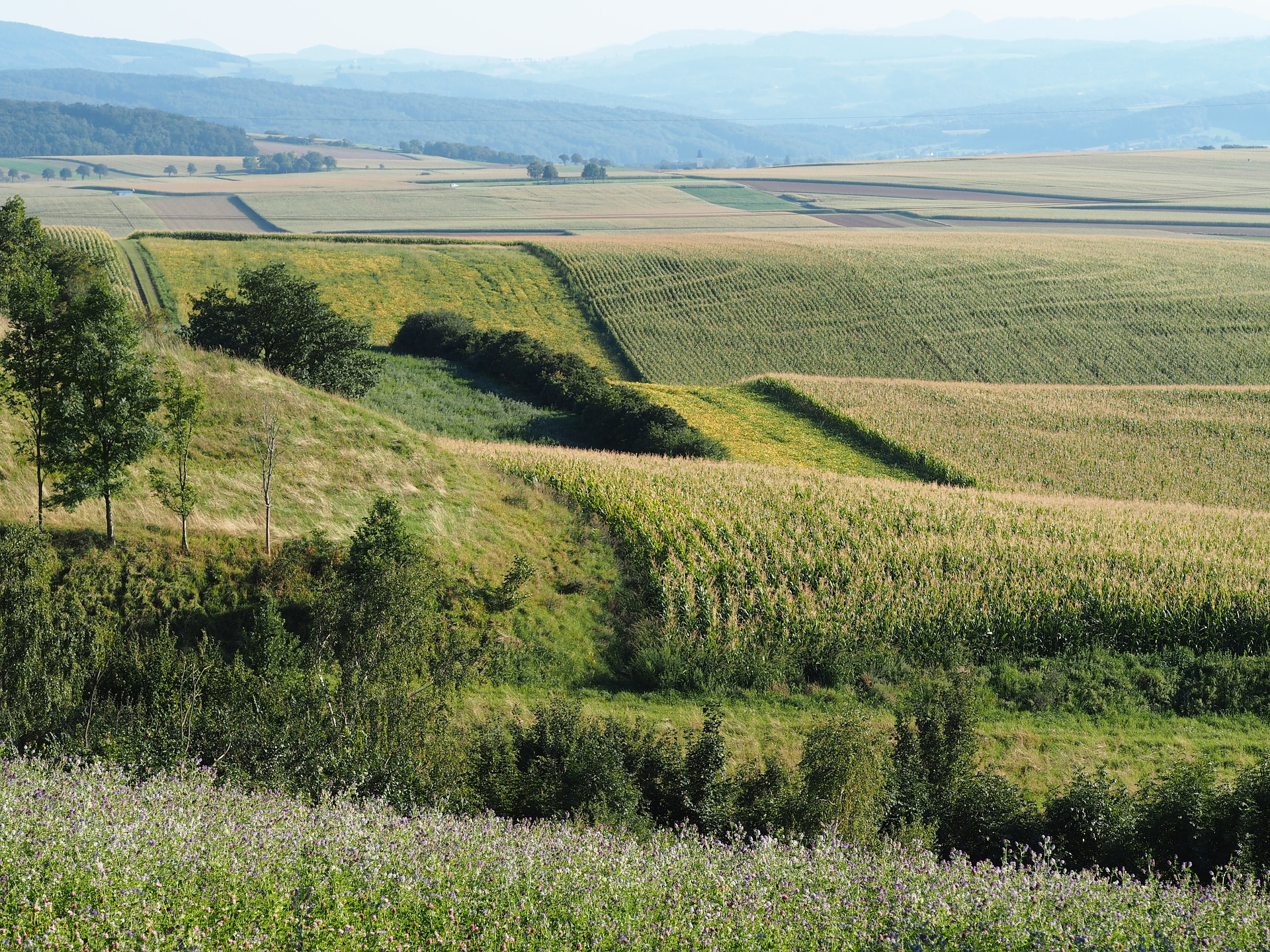 Про це інформує Державна екологічна інспекція Закарпатської області.