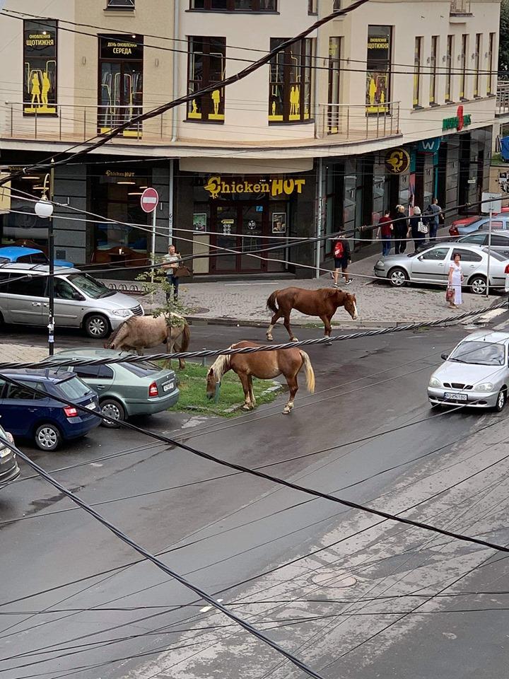 Відповідні світлини опублікував очевидець прогулки. Коні гуляли по вул. Швабській.