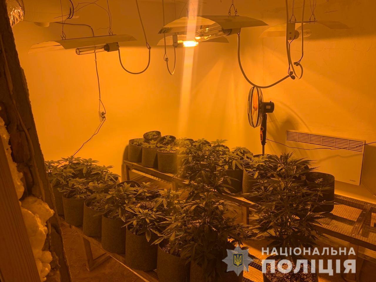 В ходе санкционированного обыска в доме жителя Раховского района правоохранители изъяли более трех десятков кустов растений каннабиса и оборудование для их выращивания.