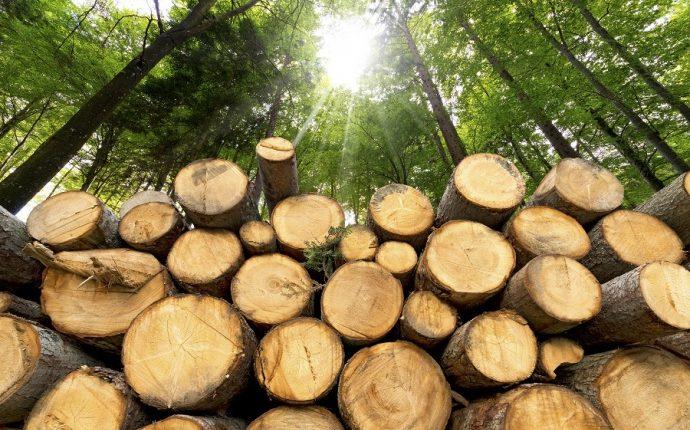 За погодження Тячівської окружної прокуратури жителю с. Нижня Апша повідомлено про підозру за фактом незаконної порубки лісу, що спричинила тяжкі наслідки (ч. 4 ст. 246 КК України).