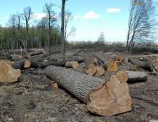 Посадовці  нашкодили лісу на понад 225 тис грн