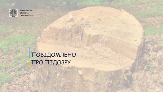 Йдеться про незаконну порубку лісу, вчинену за попередньою змовою групою осіб.