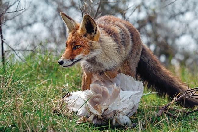 Тварини можуть бути хворими на сказ.
