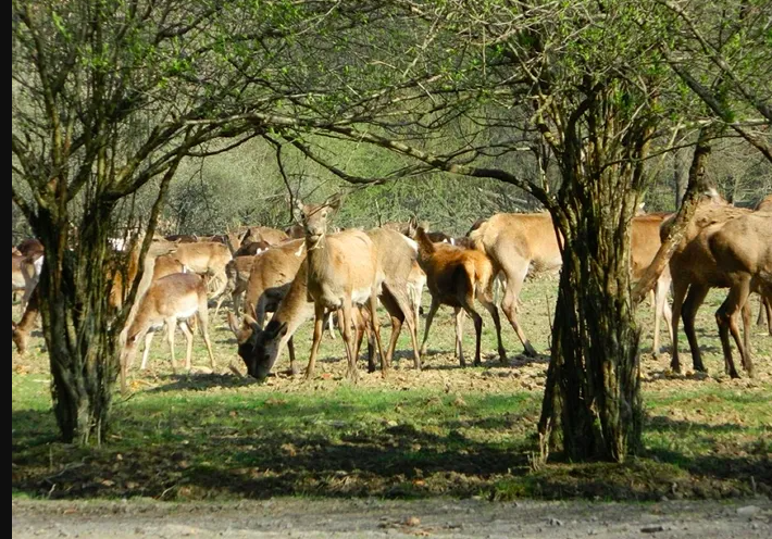 Об этом сообщила Государственная экологическая инспекция Закарпатской области.