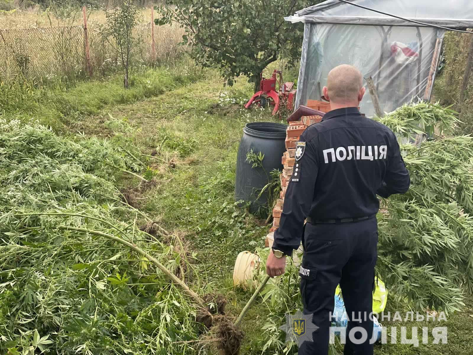 Вчора, 22 вересня, у селі Неветленфолу  працівники поліції Берегівщини провели обшук за місцем проживання 40-річного фігуранта злочину.