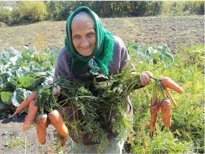 Українців, у яких є городи, змусять платити податки не залежно від того буде власник вирощувати овочі для продажу чи тільки для власних потреб.