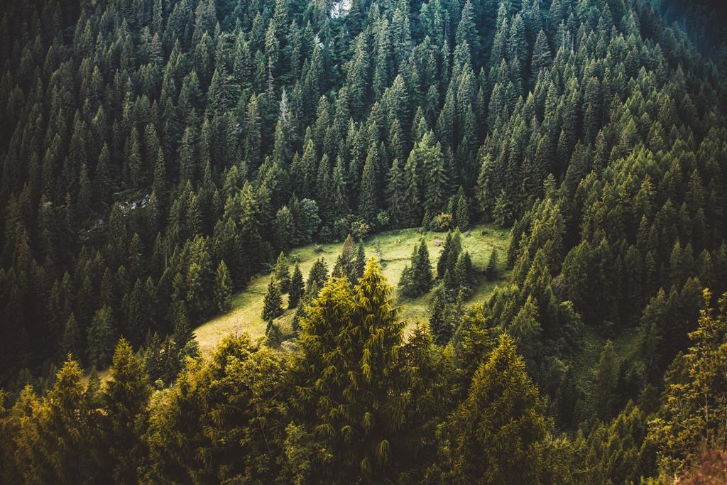 Ліси завжди були і залишаються головним ресурсом Закарпаття – аналітик
