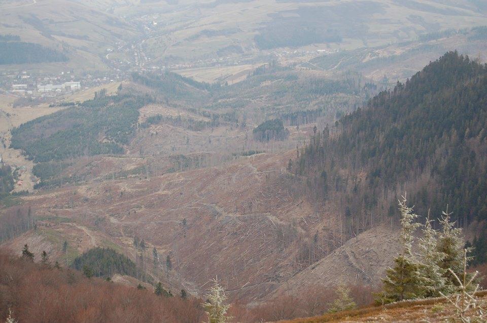 Шок! В мережі показали фото масштабної вирубки лісу над Воловцем