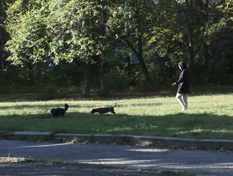 На подвір'ї 12-ї школи в Ужгороді, де гуляють учні молодших класів, мешканці міста вигулюють своїх собак.
