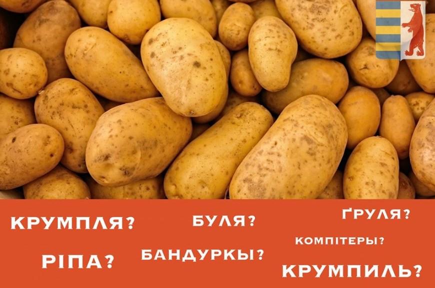 Історія виникнення усіх цих назв картоплі.