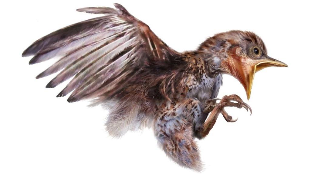 Знайдено пташеня, яке застигло в бурштині 99 мільйонів років тому