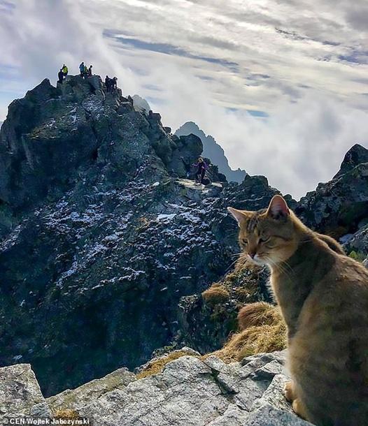 У Польщі на вершині гори альпініста зустрів домашній кіт (Фото)