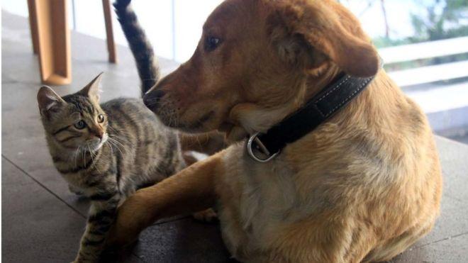 Ветеринары советовали владельцам котов не выпускать их на улицу, чтобы предотвратить распространение коронавирус среди животных