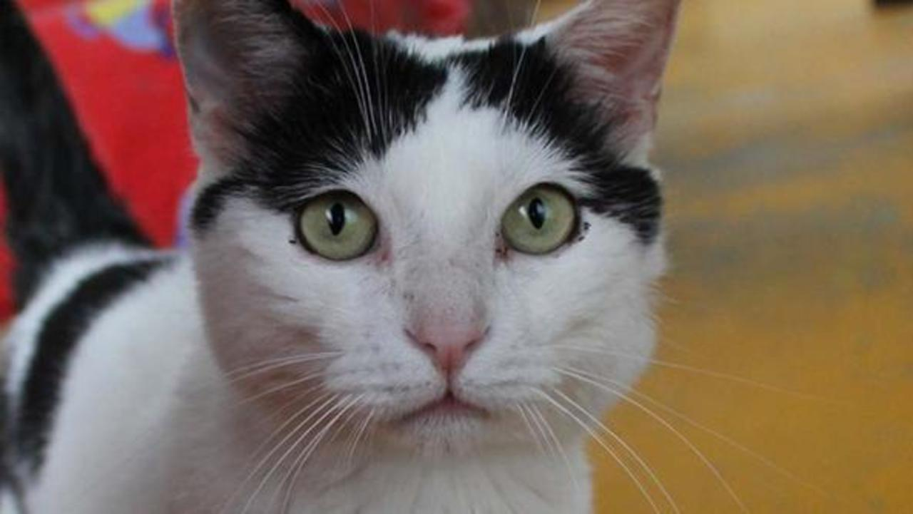 В Італії кіт отримав у спадок від господині 1,5 млн євро
