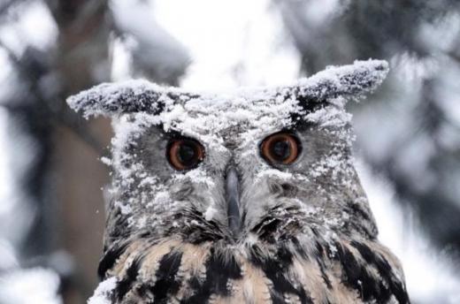 В Закарпатської області очікується сильний сніг