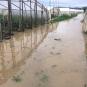 Врожаю не буде: на Закарпатті підтопило сотні гектарів сільгоспугідь (ФОТО)
