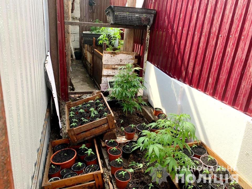 16 июня сотрудники полиции пресекли незаконную деятельность очередного наркозлочинця на Виноградовщине.