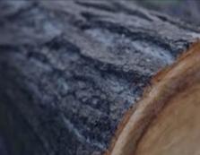Закарпатська прокуратура скерувала до суду два обвинувальні акти за фактами незаконної порубки дерев у заповіднику