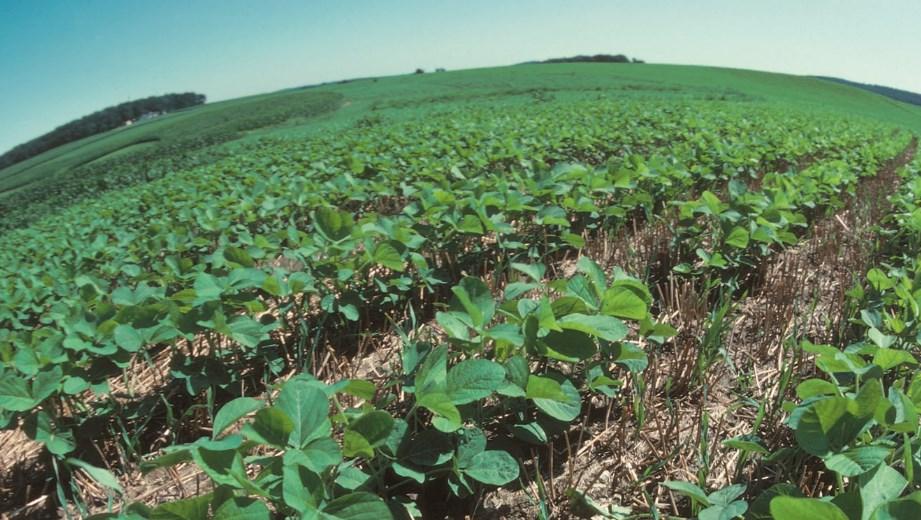 Нова технологія вирощування рослин при якій не потрібно орати поле перед тим, як його засіяти.